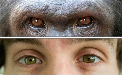 hombres y primates